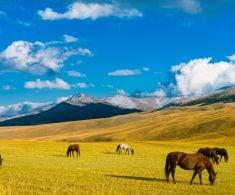 Kazachstan (4)